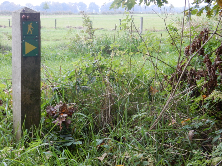 Boerenpad wandeling in stilte